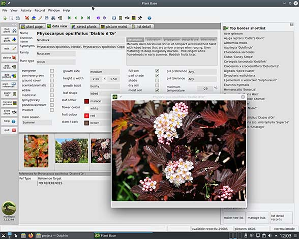 Screenshot_MX19-KDE_2-1-12_small